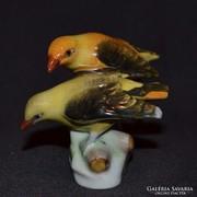 Herendi sárgarigó madár pár