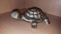 Hollóháza teknősbéka ritka gyűjtői darab