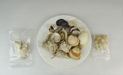 0P177 Régi kagyló csiga tengeri kőzet csomag