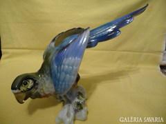Hatalmas méretű papagáj