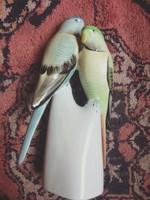 Hollóházi papagáj páros