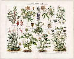 Mérgező növények II., litográfia 1894, német nyelvű, eredeti, színes nyomat, növény,virág, méreg