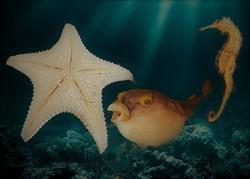 """A tenger vadjai"" (Állatpreparátumok)"