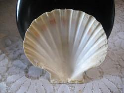 """""""Shell """"  kagyló   ,szép, 11 x 10 cm"""