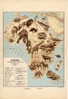Afrika állatföldrajzi térkép 1928, magyar nyelvű, 28 x 40 cm, állat, hal, madár, emlős, gerinces
