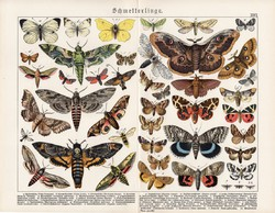 Pillangók, lepkék, litográfia 1890, eredeti, 32 x 41 cm, nagy méret, német, latin, pillangó, lepke