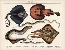 Rája, sasrája, ingola, litográfia 1890, eredeti, 32 x 41 cm, nagy méret, hal