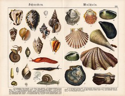 Csigák és kagylók, litográfia 1890, eredeti, 32 x 41 cm, nagy méret, német, csiga, kagyló
