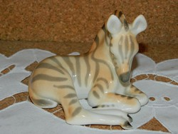 Lomonosov fekvő zebra.