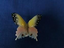 Ens, Volkstedt pillangó, lepke