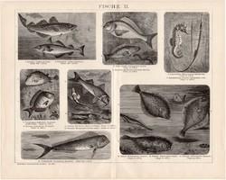 Halak II. és III., I., egyszínű nyomat 1893, német nyelvű, eredeti, hal, tenger, óceán, folyó, régi