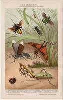 Rovarok I., litográfia 1893, színes nyomat, német nyelvű, Brockhaus, rovar, állat,