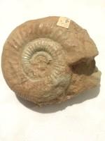 """Ammonitesz!(""""bél"""")"""