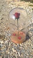 Kovácsoltvas rózsa búrában kézzel készített Valentin napi akció !!!!!!