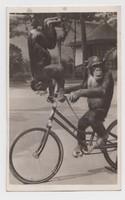 Maxi és Mietze kerékpárművészek - ZOO-BUDAPEST -, Hölzel Gyula felvétele 1931.
