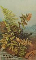 Csodás antik angol növény motívumos képeslap