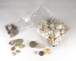 0X446 Régi kagyló csiga ásvány gyűjtemény 1.5 kg