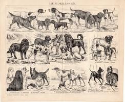 Kutyafajták, egyszínű nyomat 1893, német, eredeti, Brockhaus, kutya, farkaskutya, szetter, állat