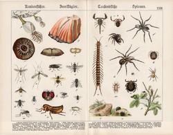 Pók, légy, darázs, bolha, skorpió, százlábú, litográfia 1920, eredeti, 32 x 41 cm, nagy méret