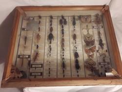 Régi rovargyűjtemény üvegezett fadobozban