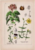 Orleánfa, árvácska és kék golgotavirág, madárhúr, mohos csitri, litográfia 1895, 17 x 25 cm, virág