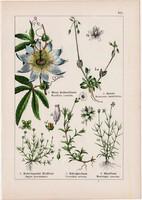 Kék golgotavirág, madárhúr, mohos csitri és orleánfa, árvácska, litográfia 1895, 17 x 25 cm, virág