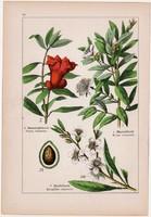 Gránátalma, mandula, mirtusz és réti füzény, ligetszépe, deréce, litográfia 1895, 17 x 25 cm, növény