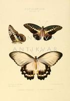 Lepkék, pillangók 2. Vintage/antik zoológiai illusztráció. Kitűnő minőségű reprint nyomat