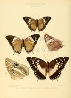 Lepkék, pillangók 11. Vintage/antik zoológiai illusztráció. Kitűnő minőségű reprint nyomat