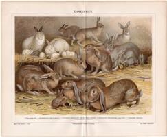 Nyulak, litográfia 1888, német nyelvű, eredeti, színes nyomat, nyúl, házinyúl, háziállat, régi