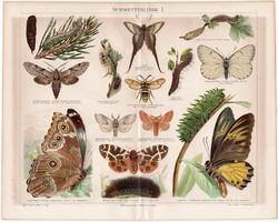 Lepkék I., litográfia 1888, színes nyomat, német nyelvű, eredeti, régi, lepke, pillangó, hernyó