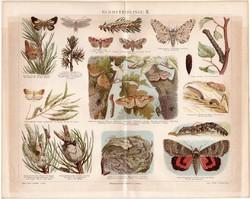 Pillangó, lepke II., litográfia 1888, német nyelvű, eredeti, színes nyomat, erdő, báb, hernyó