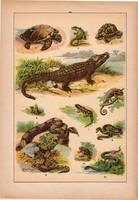 Állatok (20), litográfia 1902, eredeti, kis méret, magyar, állat, teknősbéka, krokodil, kígyó, gyík