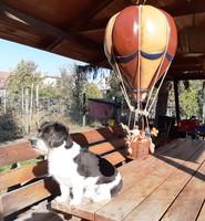 Régi német léggömb, ép, hiánytalan, 65 cm magas... Kutya nélkül eladó!