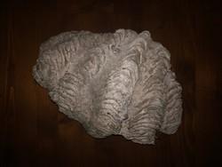 Óriás kagyló