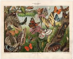 Pillangók I., 1908, színes nyomat, német nyelvű, eredeti, régi, lepke, pillangó, hernyó, litográfia