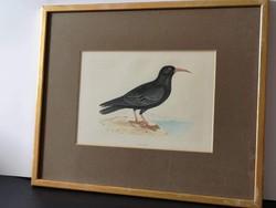 Feketerigós litográfia 1889 k. Montgolfier vízjellel