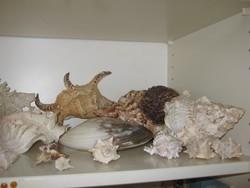 Hatalmas tengeri kagyló, csiga gyűjtemény