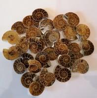 Ammonita, ammonitesz,kövület