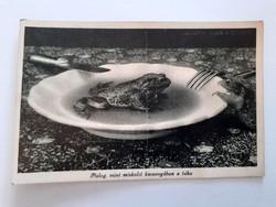 Régi Miskolc képeslap Pislog, mint miskolci kocsonyában a béka feliratos üdvözlőlap
