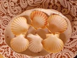 6 db. Shell osztriga kagyló, tálaláshoz, dísznek. 11x10 cm