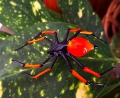 Murano hibátlan kézi üveg gyártású pók egyedi darab ismeretlen időből