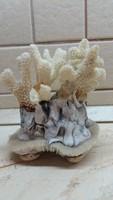 Fehér tengeri korall kagyló lábon eladó!
