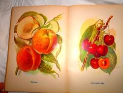 ----Gyümölcstermesztés  a házi és háztáji kertekben 1959 év