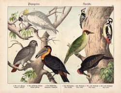 Papagáj, kakadu, tukán, harkály, fakopáncs, litográfia 1886, eredeti, 32 x 41 cm, nagy méret, madár