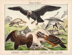 Keselyű, kondor, saskeselyű, litográfia 1886, német, eredeti, 32 x 41 cm, nagy méret, ragadozó madár