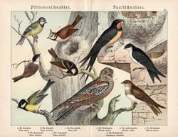 Cinege, fecske, európai lappantyú, litográfia 1886, eredeti, 32 x 41 cm, nagy méret, madár, nyomat
