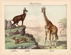 Zsiráf, gazella, zerge, litográfia 1886, német nyelvű, eredeti, 32 x 41 cm, nagy méret, patások