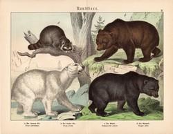 Ragadozók (6), litográfia 1886, német nyelvű, eredeti, 32 x 41 cm, nagy méret, medve, jegesmedve
