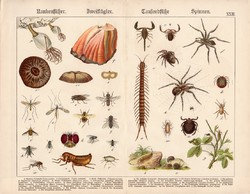 Pók, légy, darázs, bolha, százlábú, skorpió, litográfia 1886, eredeti, 32 x 41 cm, nagy méret